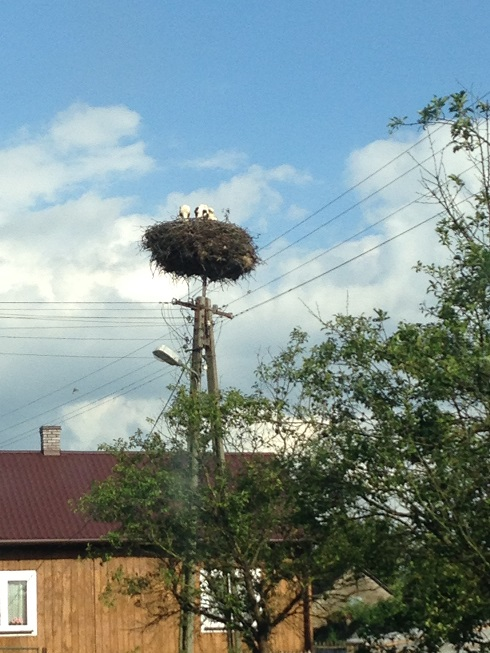 Some funny birds nests are all over rural Poland